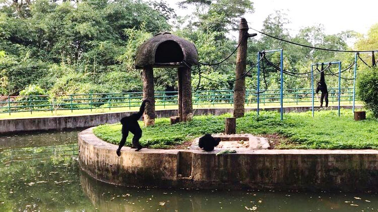 Morning air, morning sun, and Siamangs's Activities All About Running By ITag Nature By ITag View By ITag Animal By ITag