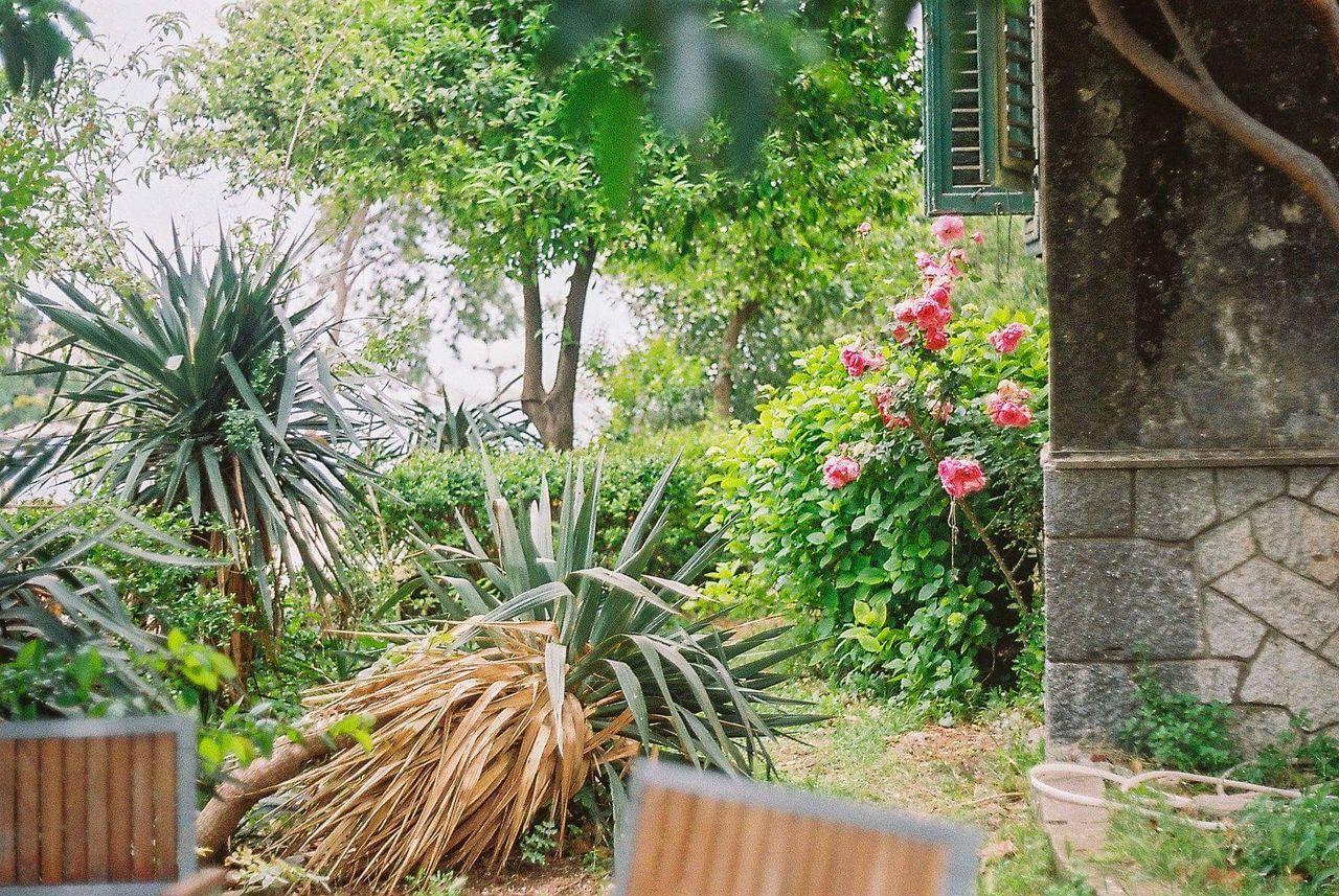 Plant Outdoors Nature No People Flower Greenhouse Garden The Week Of Eyeem The Week On Eyem