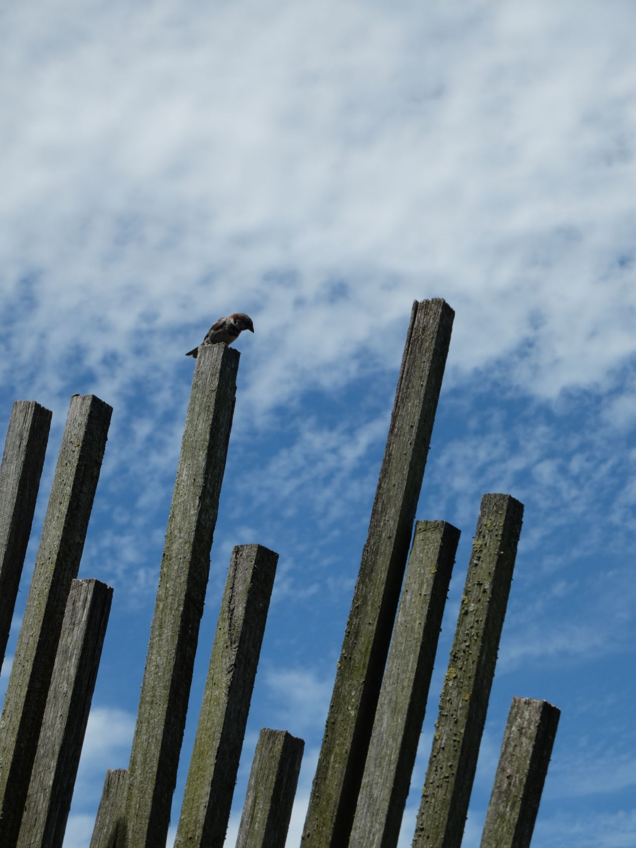 Alone Chilling Close-up Cloud - Sky Crossroads Day Deep Thoughts Fence Future Lonely Low Angle View No People Outdoors Peace Picket Fence Pondering Recharge Relax Resting Sky Thinking Tranquility Wondering Wood - Material Wooden Post