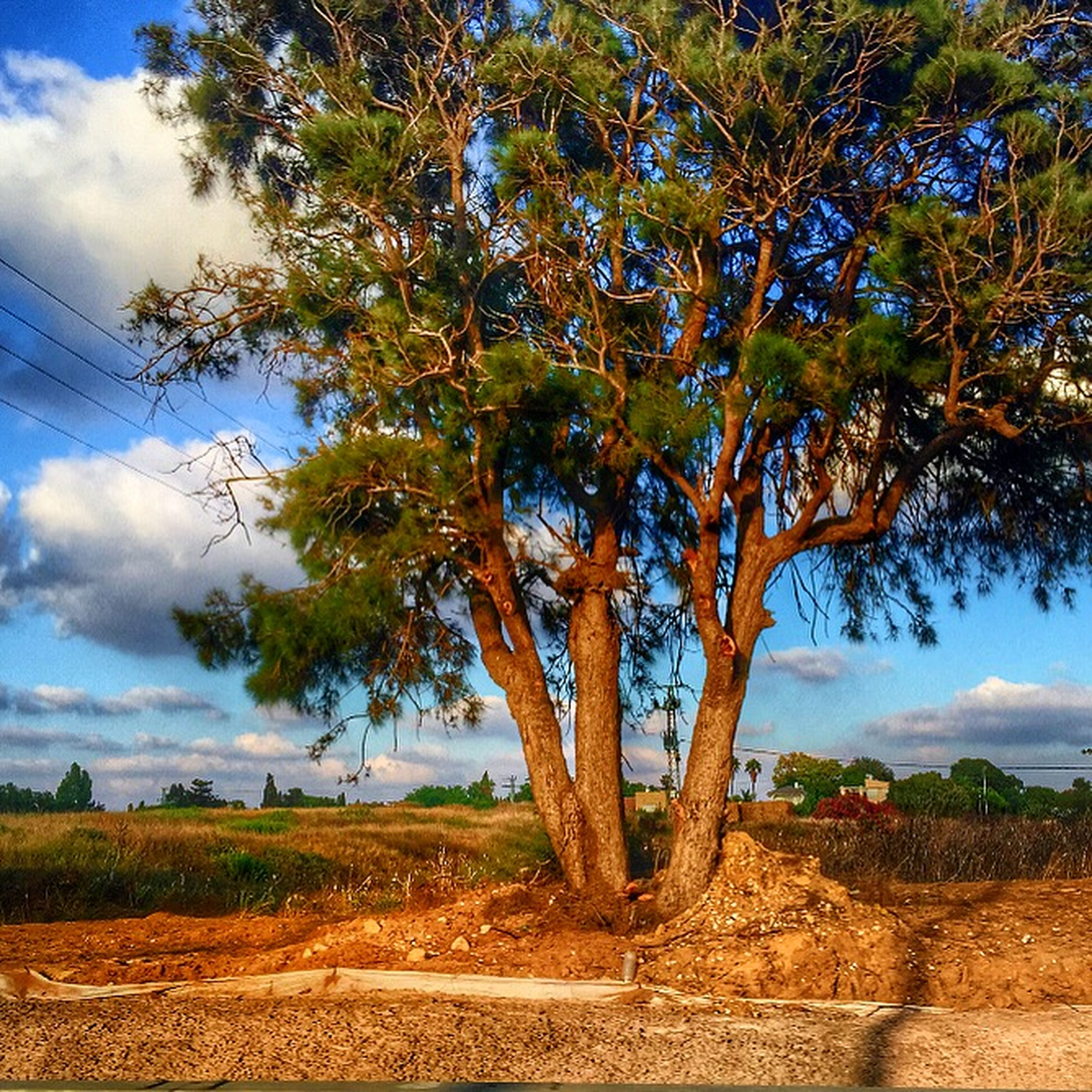 tree, sky, tranquility, growth, tranquil scene, cloud - sky, nature, beauty in nature, scenics, cloud, landscape, sunlight, branch, low angle view, field, day, outdoors, no people, tree trunk, green color