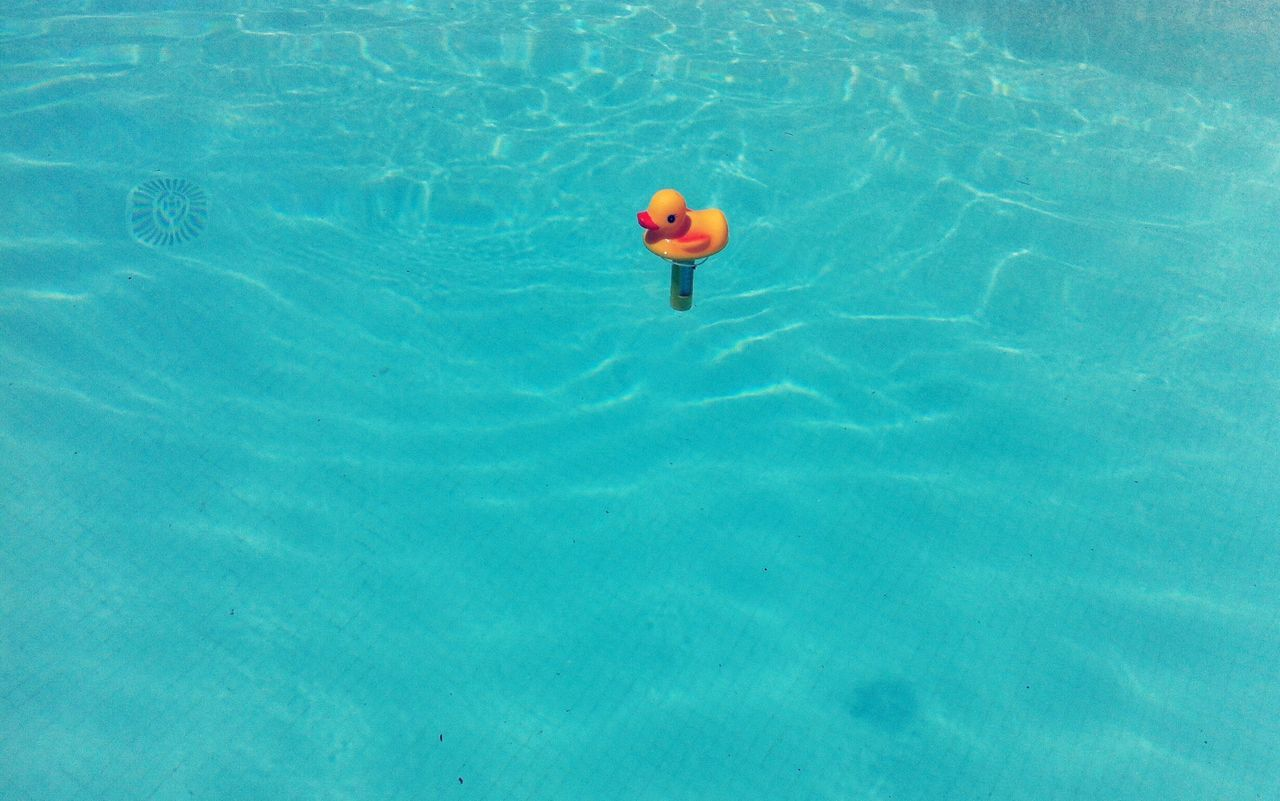 Swimming Pool Water Outdoors High Angle View Swimming Day No People Blue Yellow Duck Thermometer