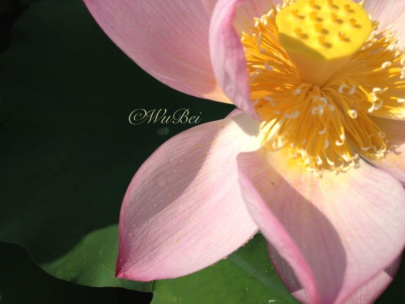 EyeEm Official Nature_collection Landscape_collection EyeEmNatureLover Flower Collection Flower Porn