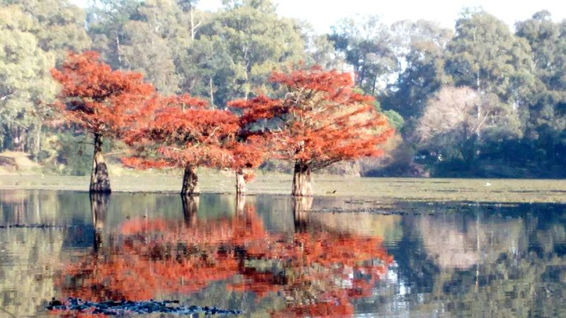 Water Reflection Water Reflection Tree Nature Lake Beauty In Nature Tranquility Growth Scenics Change Autumn Waterfront Day Tranquil Scene Outdoors Multi Colored No People Sky