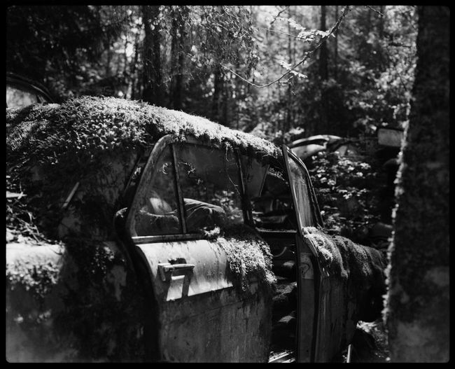 Metal and Rust in Båstnäs Abandonded Cars Abandoned Places American Cars American Cars Vintage Analogue Photography Automotive Black And White Båstnäs Car Cemetery Car Doors Exploring Filmphotography Forrest Hidden Secrets Magic Melancholy Metal Nature No People Plaubel Makina 67 Scandinavia Sweden Travel Trees Over Cars Vintage