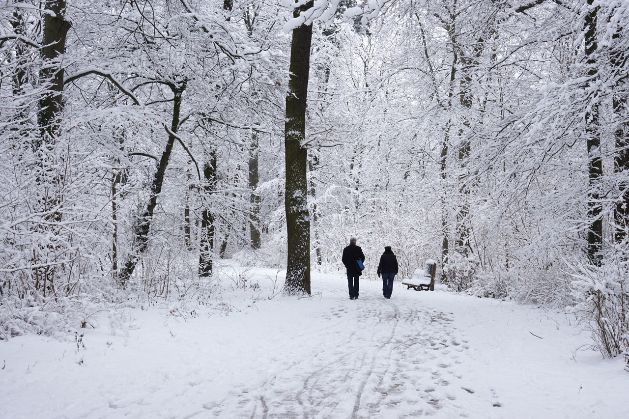 Authentic Cold Couple Fitness Forest Full Length Leisure Activity Nature Outdoor Path People Person Real People Rear View Snow Sport Trees Unrecognizable Walk Walking Weather Winter WoodLand Woods