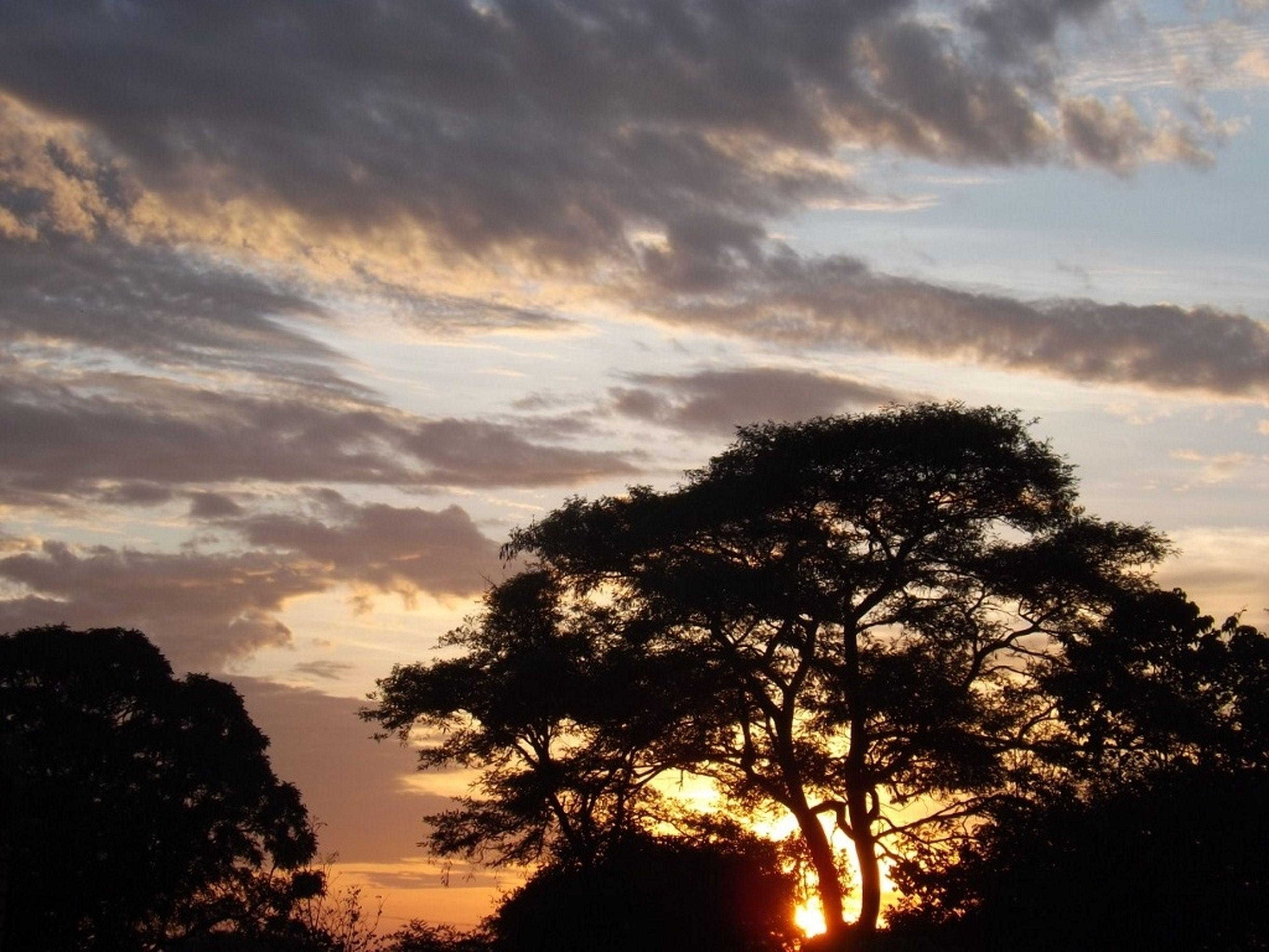 sunset, silhouette, tree, sun, sky, tranquil scene, scenics, tranquility, beauty in nature, orange color, nature, cloud - sky, idyllic, sunlight, back lit, cloud, dramatic sky, sunbeam, low angle view, majestic