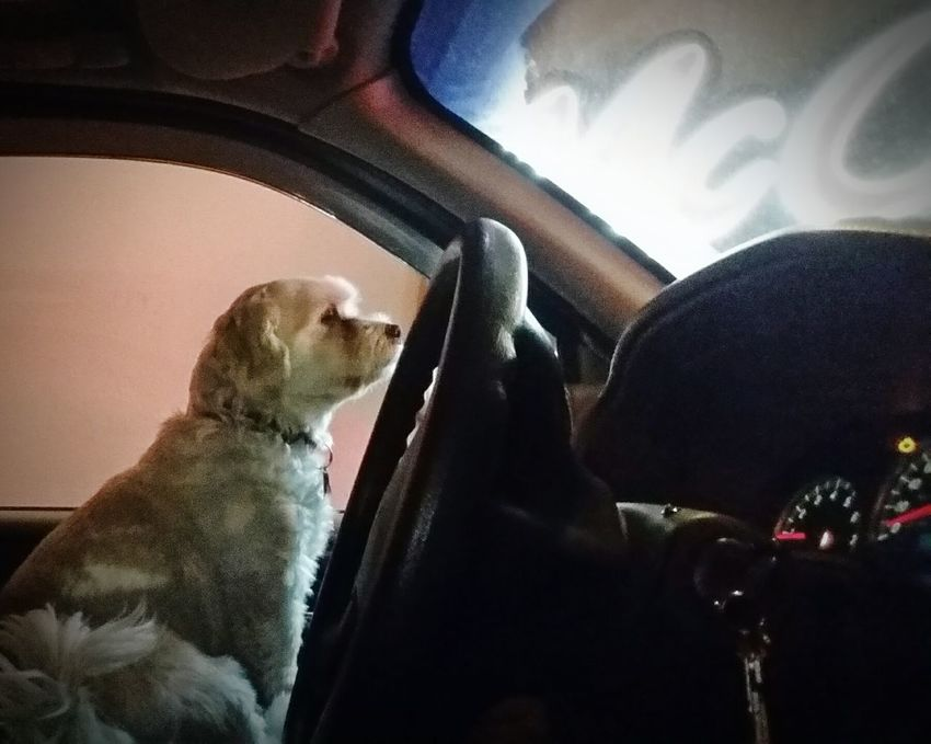Better Look Twice Dog Life Waiting In Line at the DriveThru Mein Automoment