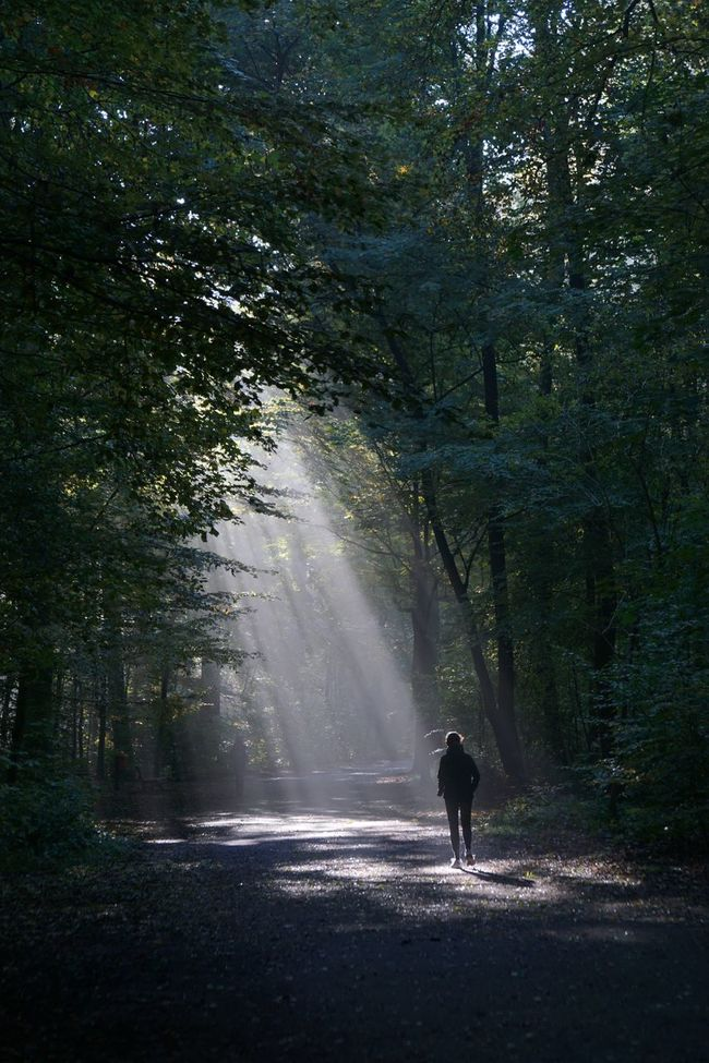 Beauty In Nature Fog Foggy Forest Into The Light Lifestyle Light And Shadow Magic Mystery Nature One Person Outdoors People Person Rear View Silhouette Solitude Sun Sunbeam The Way Forward Tree Unrecognizable Walking Woods