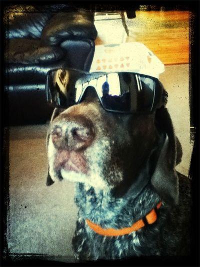 Pup Rockin My Oil Rigs