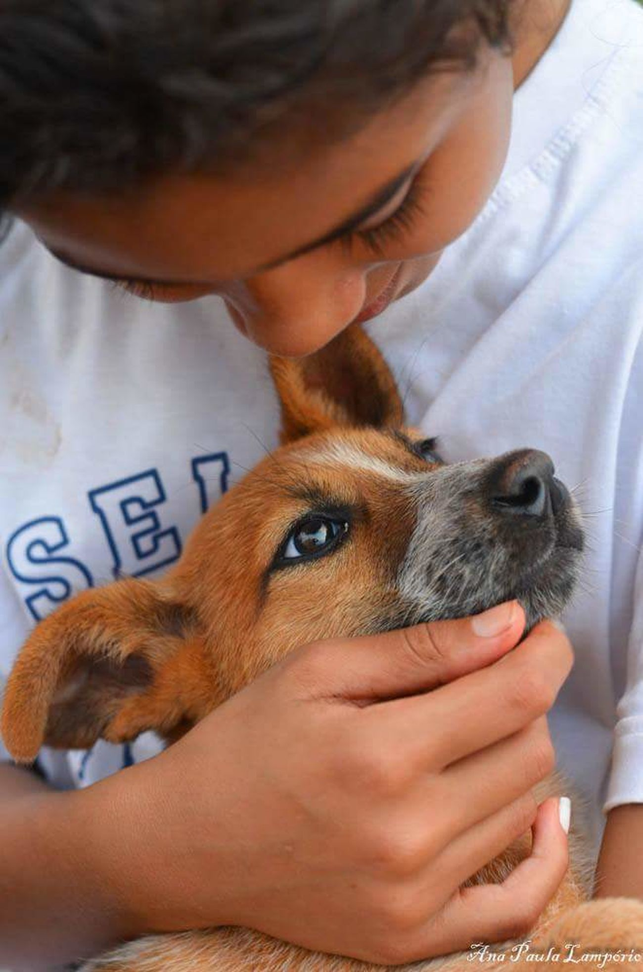 AmizadeVerdadeira Pets Dog Domestic Animals MelhorCompanhia MelhorAmigo Fazenda Nikon Nikon D5100  Nikonphotographer Nikontop Nikon_photography Nikon Photography 50mm F1.8 Brasildosmeusolhos_ Paraná Brazil