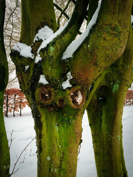 Beauty In Nature Close-up Day Growth Nature No People Outdoors Sky Statue Tree Tree Trunk