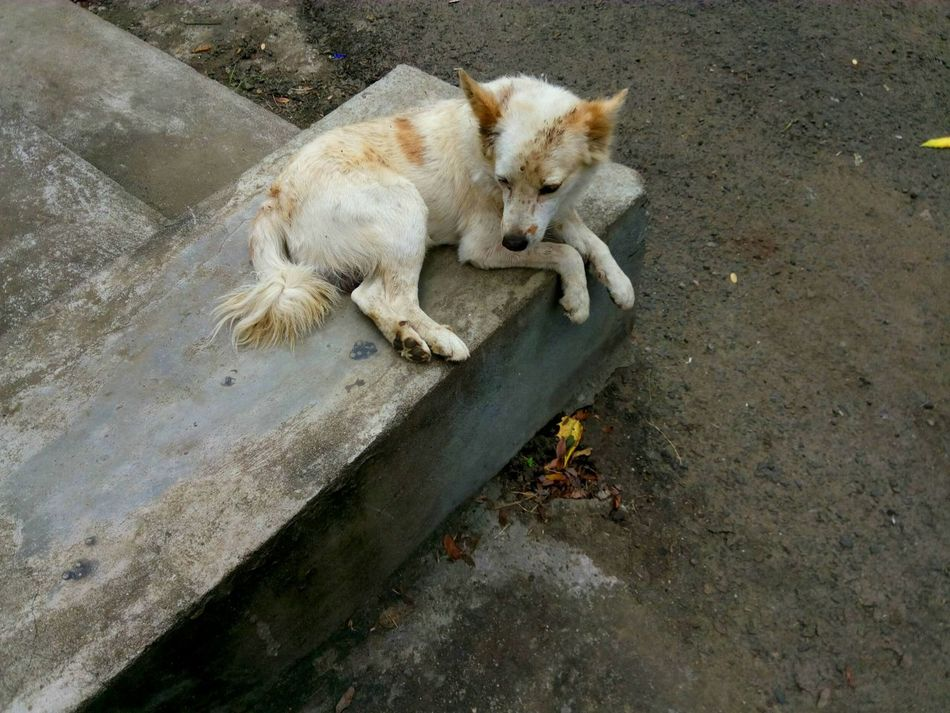Heyyyy, Street Photography Street Dog White Dog Animal_collection Animal Muddy Dog Dog Relaxing  But Still A Lot To See In Nagpur,IndiaDogs Life