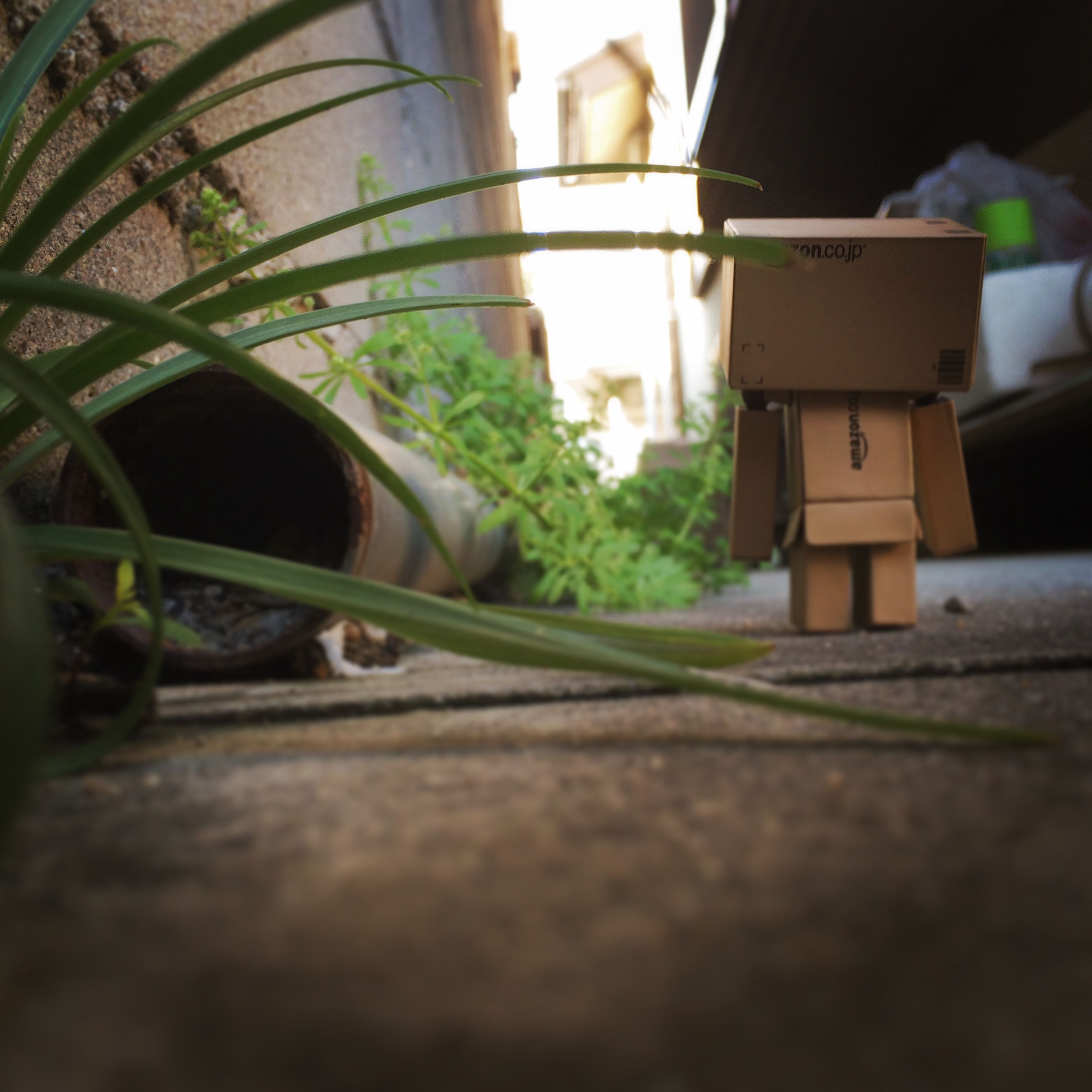selective focus, surface level, potted plant, sunlight, plant, street, close-up, no people, shadow, built structure, leaf, growth, focus on foreground, outdoors, focus on background, day, green color, building exterior, nature
