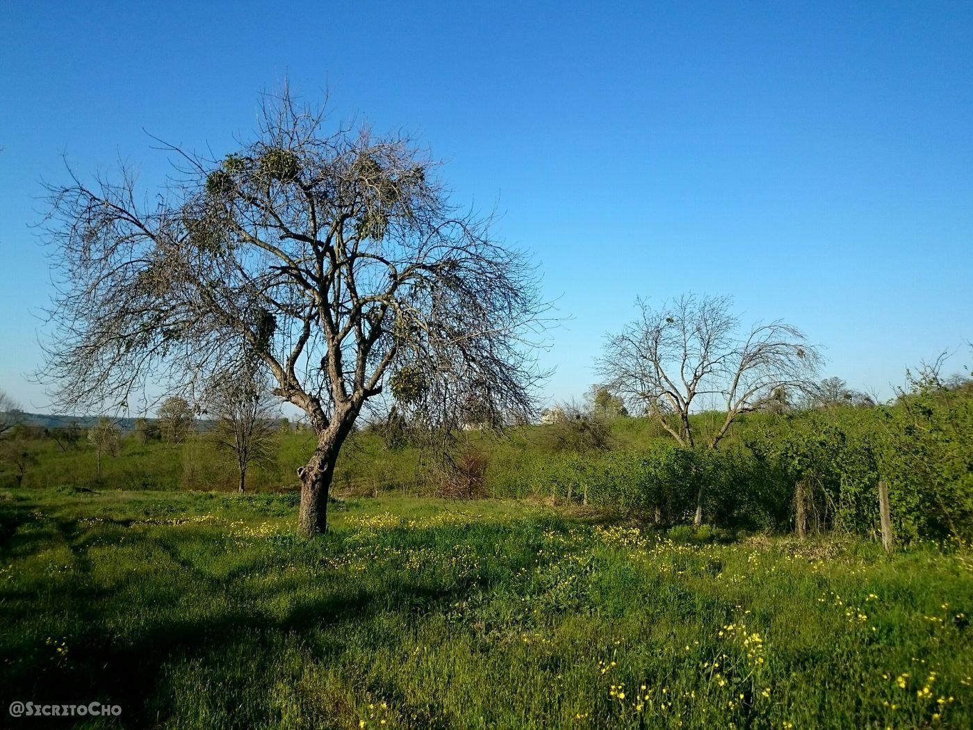 Sakarya Ferizli Sky Nature Nature_collection Taking Photos Sky Collection Trees Enjoying Life