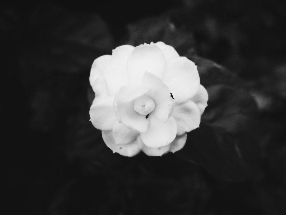 Jasmine Black & White So Soft