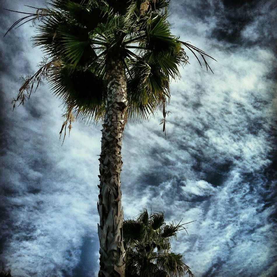 LiveanddirectfromLosAngeles Lookingup Sky Skyporn Palm Tree Losangeles Clouds Clouds And Sky From My Point Of View Looking Up Jj