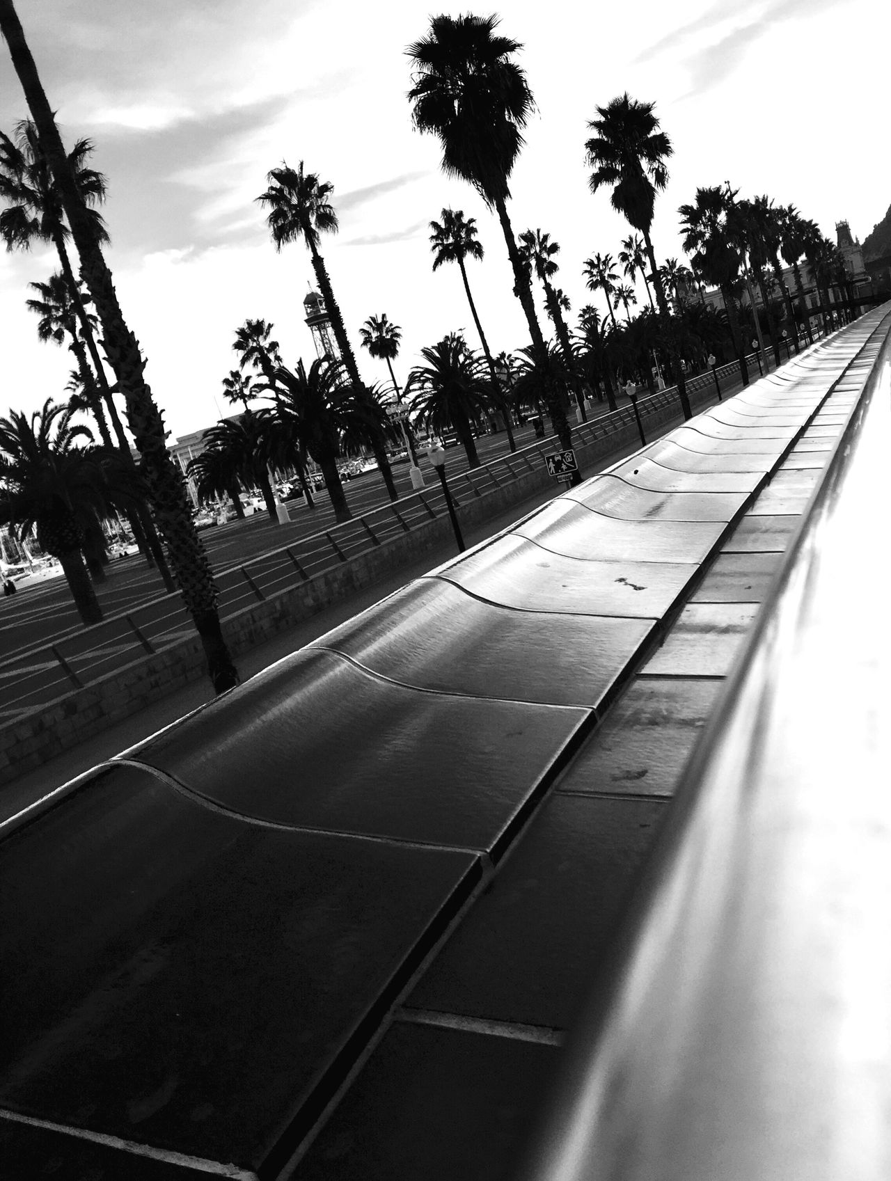 Tree Palm Tree Sky The Way Forward Day No People Outdoors Nature Bnw_collection Streetphotography Streetphoto_bw EyeEm Gallery Blackandwhite Blackandwhite Photography Bnw_captures Barcelona