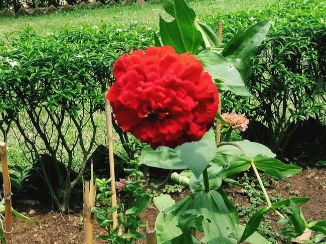Growth Day Nature Outdoors Plant Red Green Color Flower Grass No People Field Beauty In Nature Freshness Fragility Close-up Let's Go. Together.