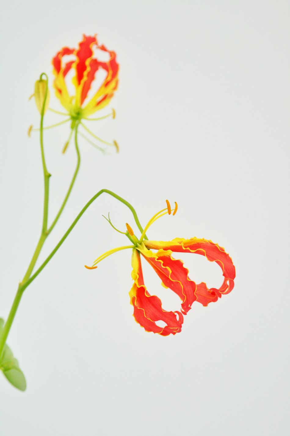 Hong kong flower show 2016 EyeEm Flower Hong Kong Flowers In Bloom EyeEm HongKong Eyeem Philippines Flowers, Nature And Beauty Flower Photography HK Flower Show Flowers HongKong Flower Show Flowerstagram HkFlowerShow Flower
