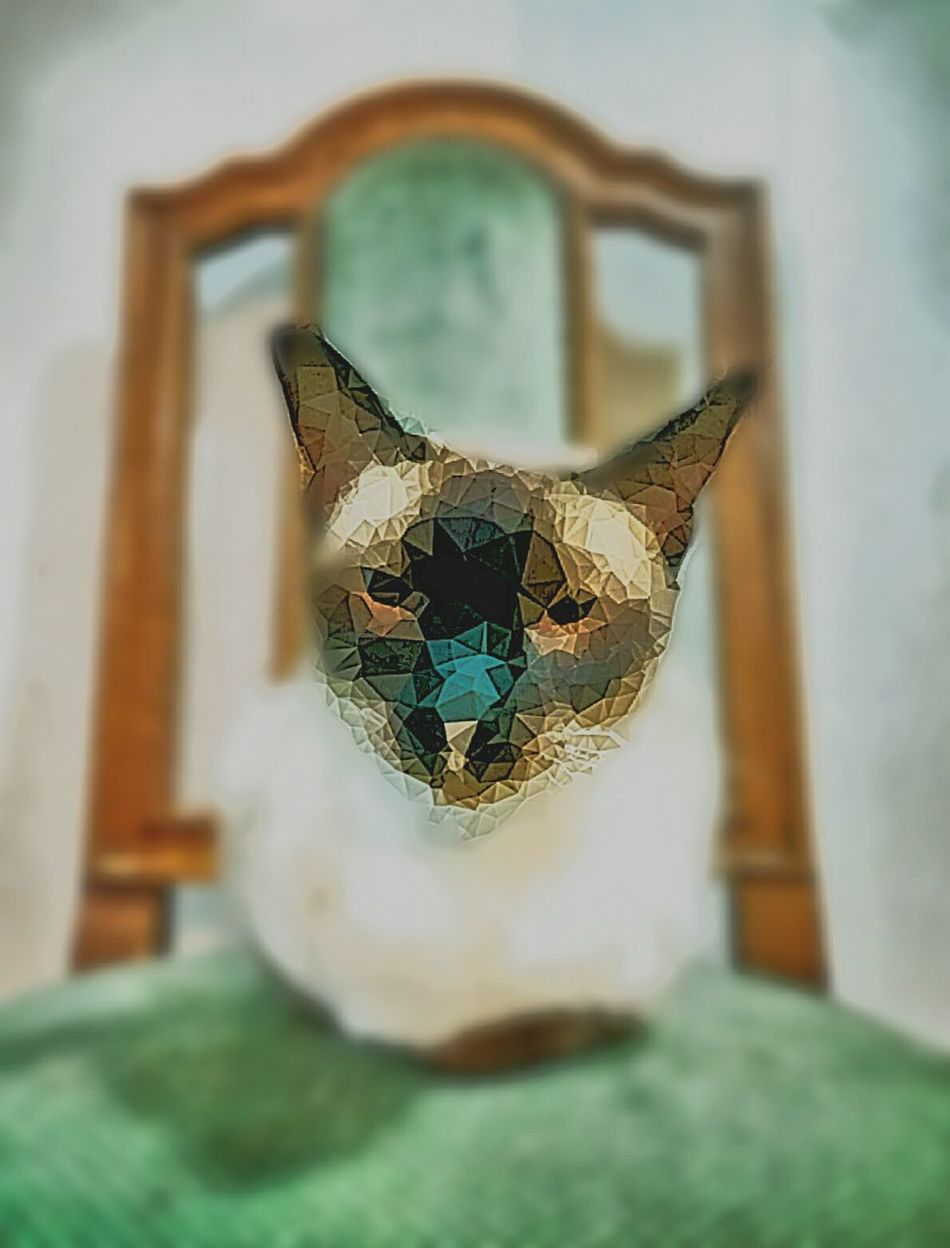Check This Out Hi! Weird Portraits Trippy Heavypostproduction Geometric Postprocessing Darkart Cat Lovers Cat Mycatisawesome