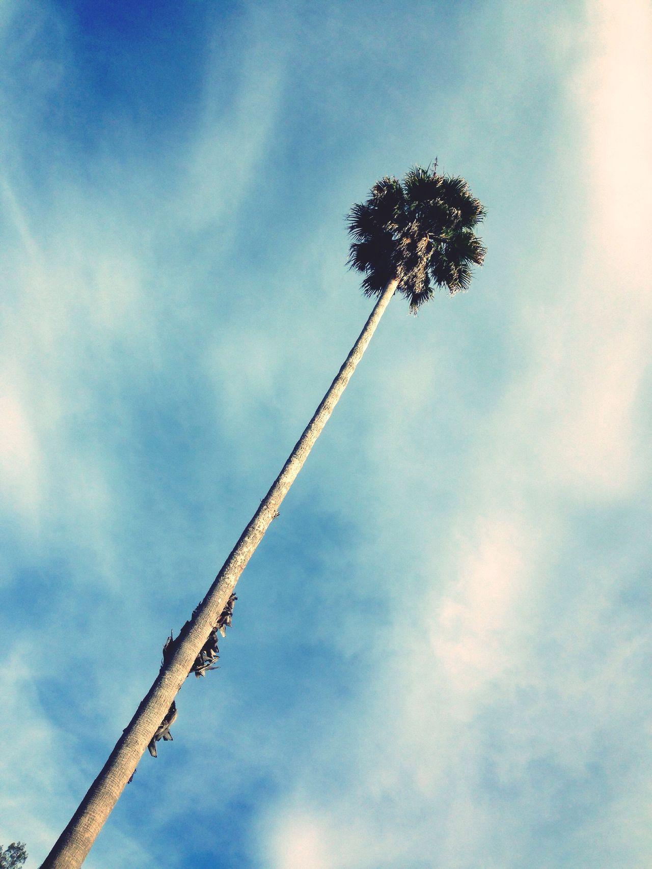 Palm Trees Blue Sky California Love California Vacation