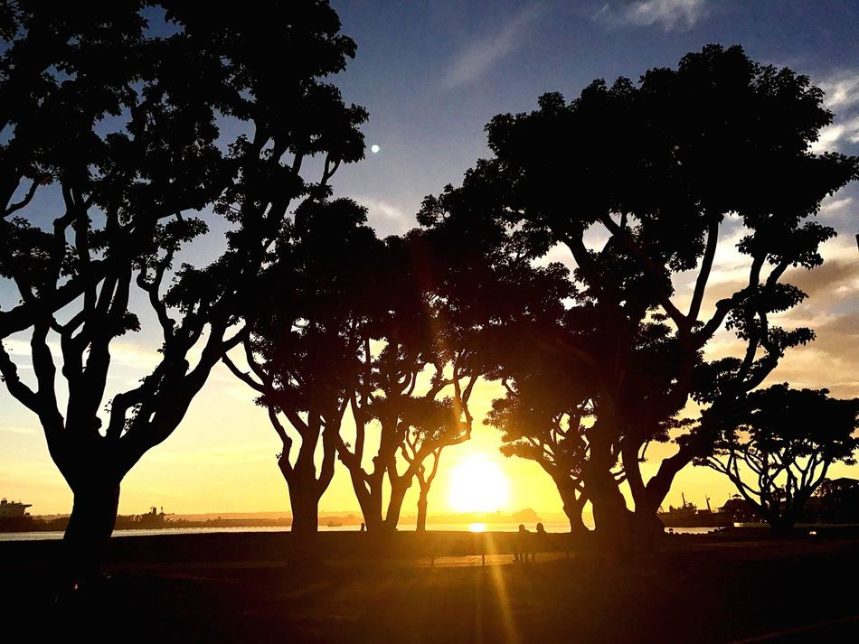 Seaport Village Sunset Nature Tree Beauty In Nature Landscape