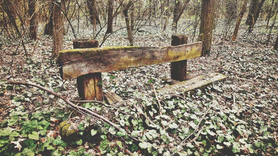 Taking Photos Old Trees Grass Leaf Moss Bench Broken Brench Hello World Check This Out Nature Spring Greenwood Hi! Mobilephotography Beauty In Nature EyeEm Nature Lover EyeEm Best Shots No People 2016