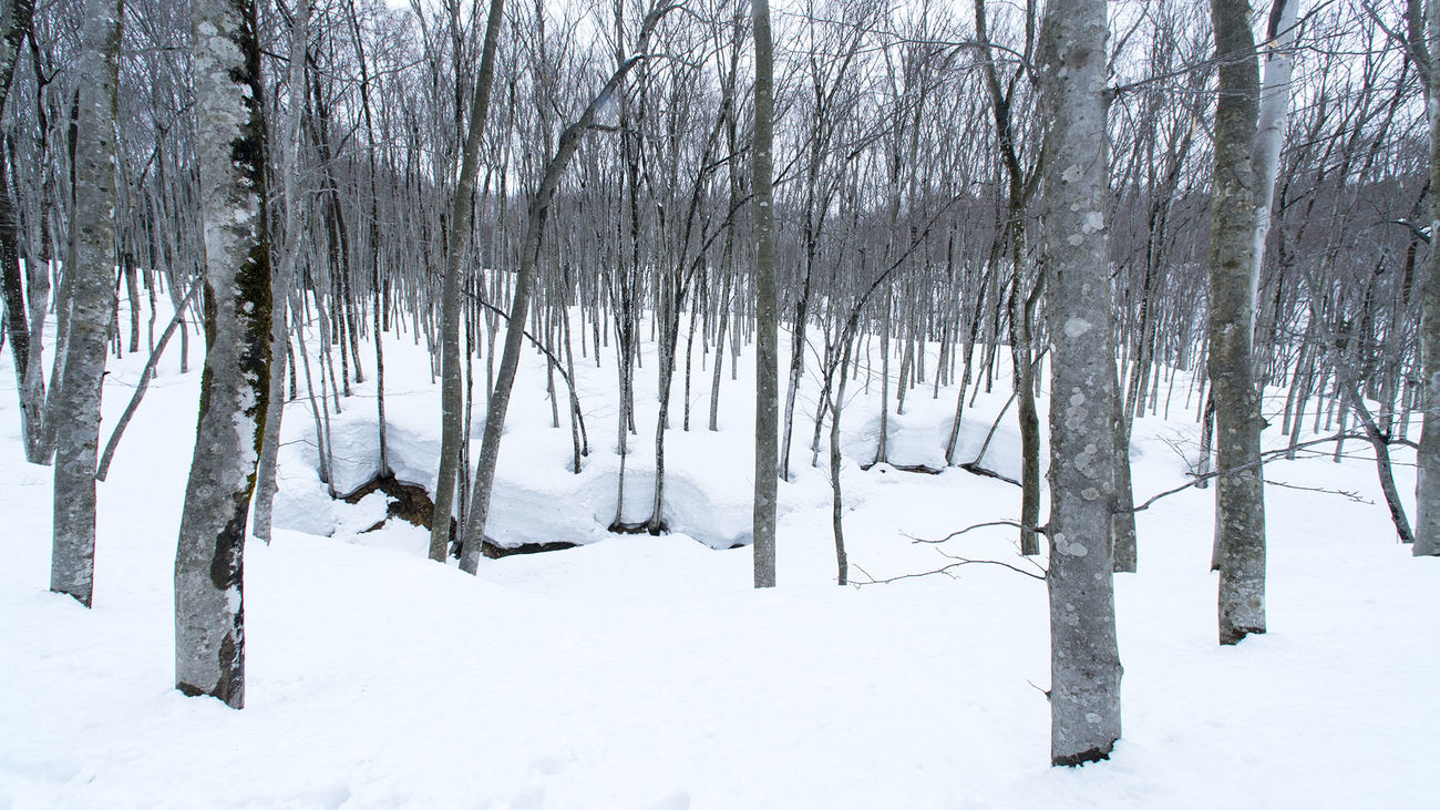 松之山/新潟 Snow 白 雪 White Winter Nature Forest