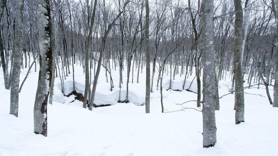松之山/新潟 Snow 白 雪 White Winter Nature Forest