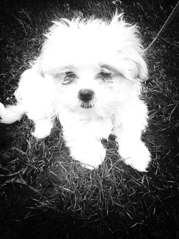Mein Mädchen A Small Dog