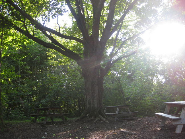 Benches Big Tree Bright Day Growth Lens Flare Nature No People Outdoors Sun Sunbeam Sunlight Tree ベンチ 公園 大木 海外