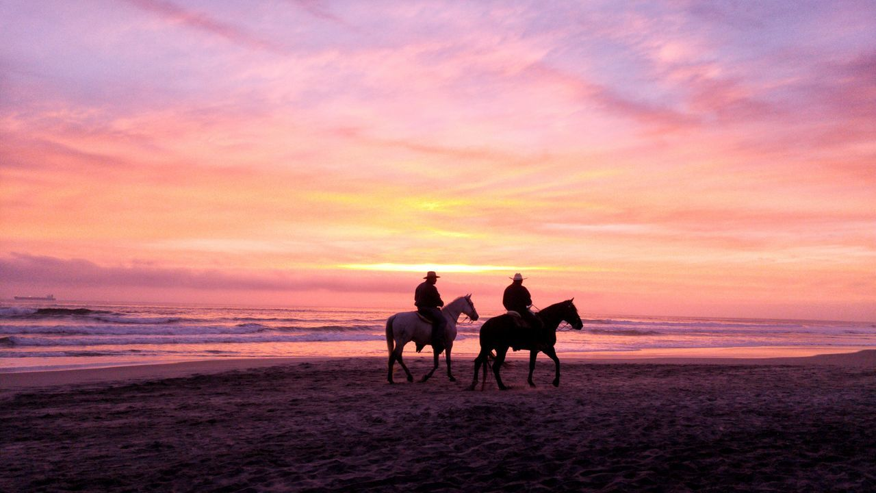 Beautiful stock photos of cowboy, Animal Themes, Beach, Beauty In Nature, Cloud - Sky
