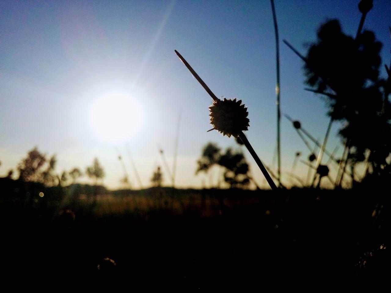 Sun Set Australian Bush EyeEmNewHere GALAXY S4