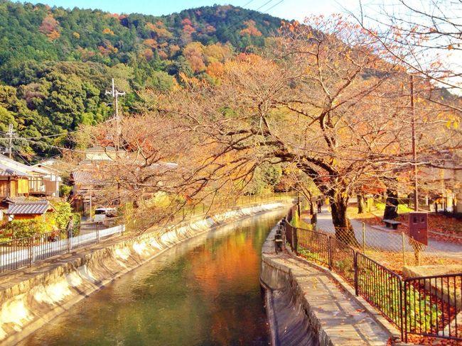 春には美しい桜並木(^_^) Walking Around Autumn Colors