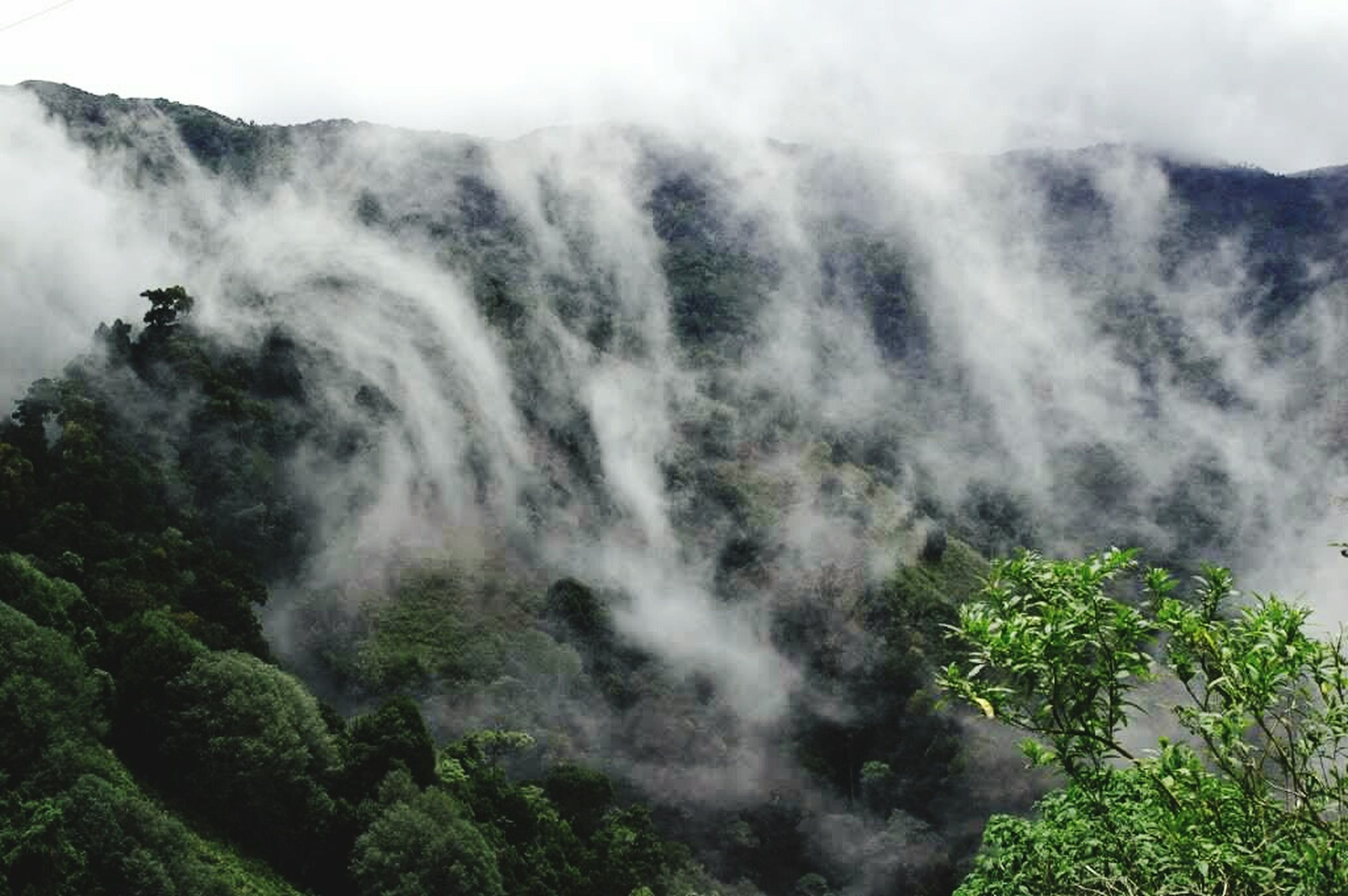 nature, beauty in nature, scenics, tree, no people, tranquil scene, outdoors, growth, tranquility, mountain, day, fog, physical geography, plant, sky, waterfall, water