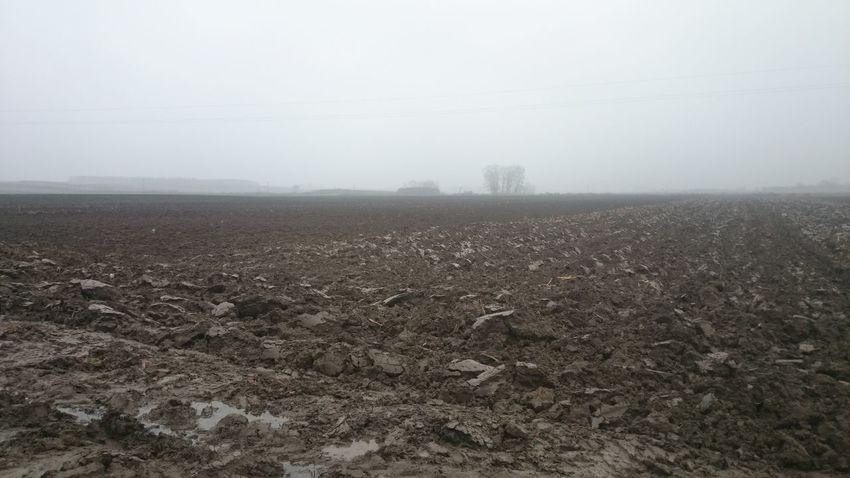 Agriculture Field Fog Landscape Outdoors Rural Scene Sky Weather