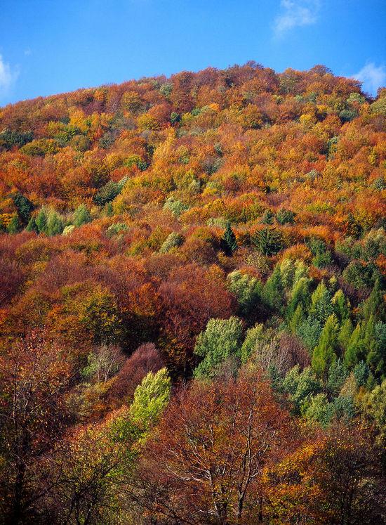 Autumn Autumn Forest Beskid Beskid Niski Beskidy Day Forest Mountain Niski No People Outdoors