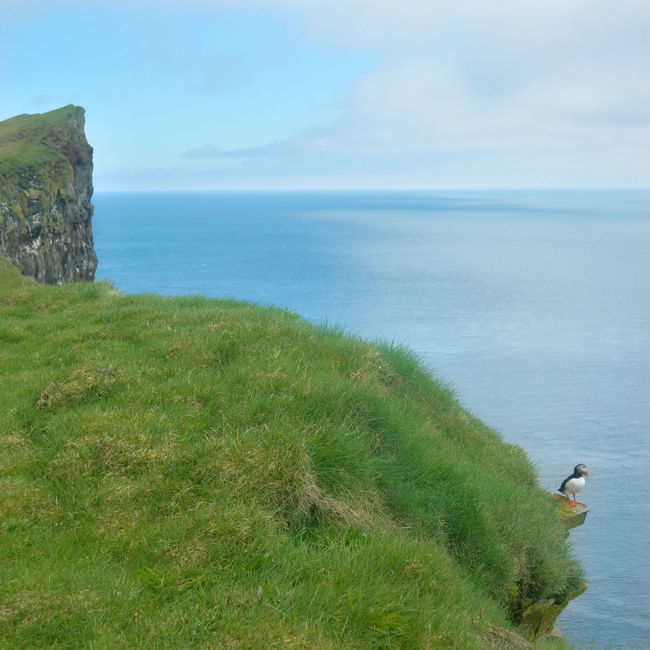 Beauty In Nature Bird Iceland Landscape Latrabjarg Nature Nature Outdoors Puffin Roadtrip Sea Sea And Sky Seaside Traveling True Water Westermost Wanderlust Outside North Nature Photography Landscape_photography Landscapes With WhiteWall