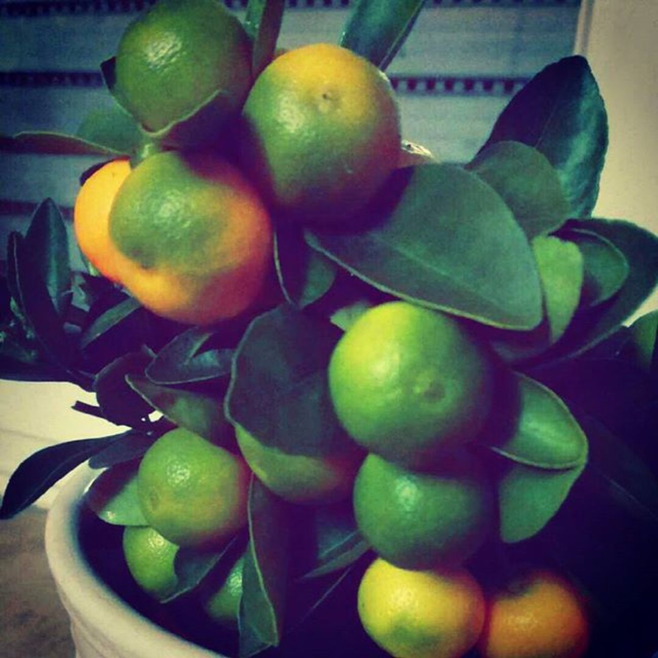 Mandarin Tree Trees Fruit Fruits L4l Instalike Mandarynka Mandarynki Owoc Owoce Drzewo Drzewko