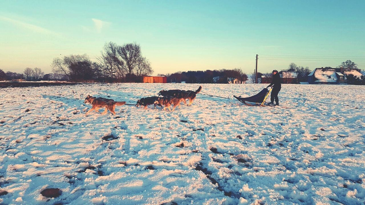 winter, snow, cold temperature, nature, sky, outdoors, field, tree, animal themes, day, water, mammal, landscape, no people, beauty in nature, domestic animals, warm clothing