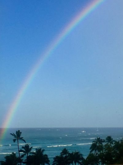 Rainbow Scenics Horizon Over Water No People Palm Tree Water Multi Colored Pacific Ocean View Ocean View Honolulu, Hawaii Island Tropics Tropical Island Lost In The Landscape Second Acts Island Of Oahu, Hawaii Waikiki Waikiki Beach Tropical Paradise Sky Ocean Perspectives On Nature Oahu / Hawaii An Eye For Travel