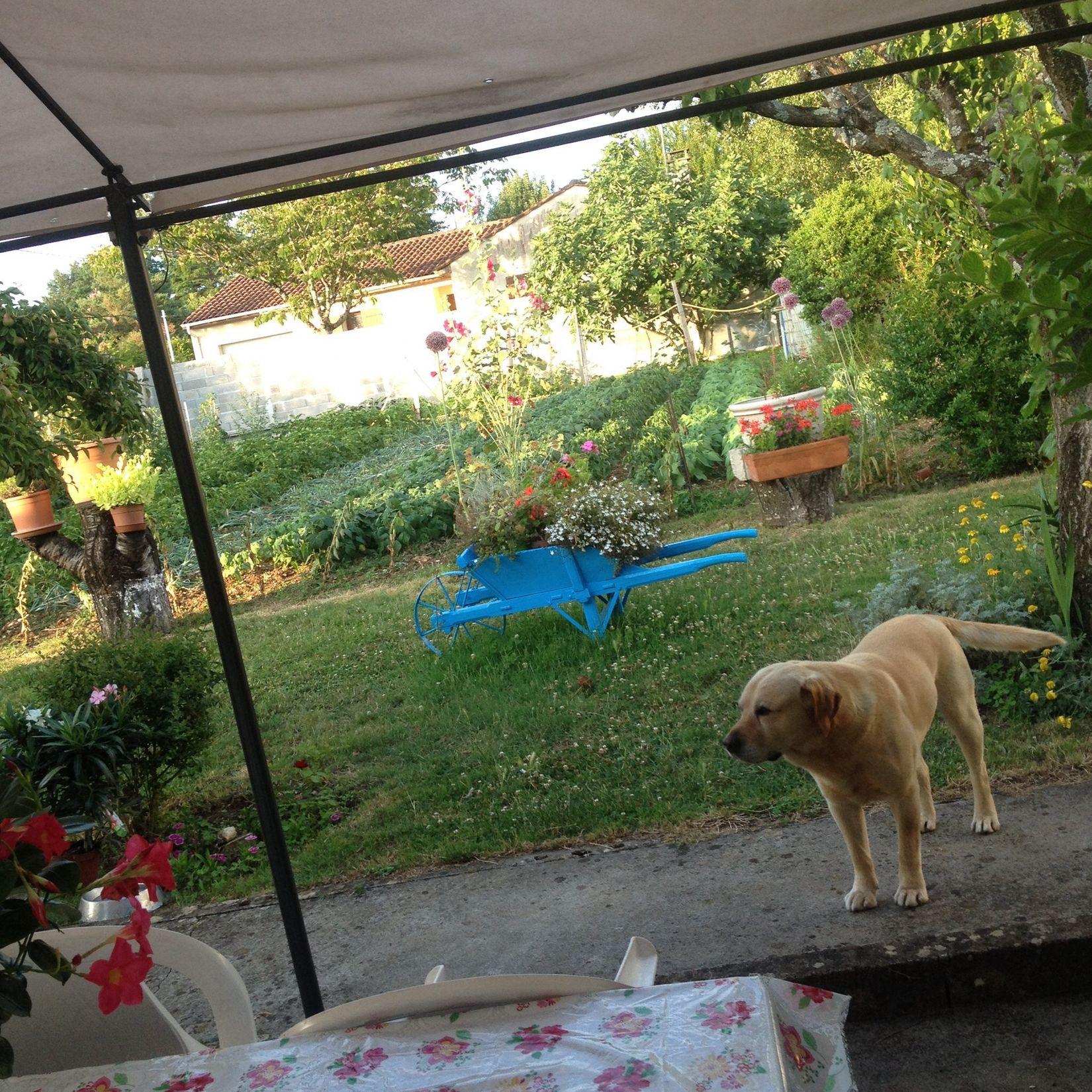 Taking Photos Relaxing Dog Garden ???????????