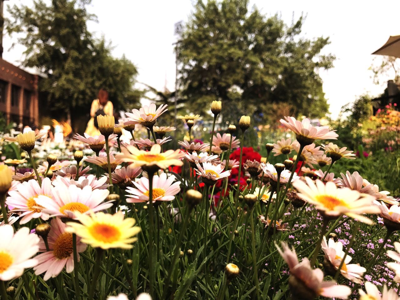 Flower Growth Fragility Freshness Petal Nature Beauty In Nature Flower Head Day Plant Tree Outdoors Blooming No People Yellow Springtime Close-up