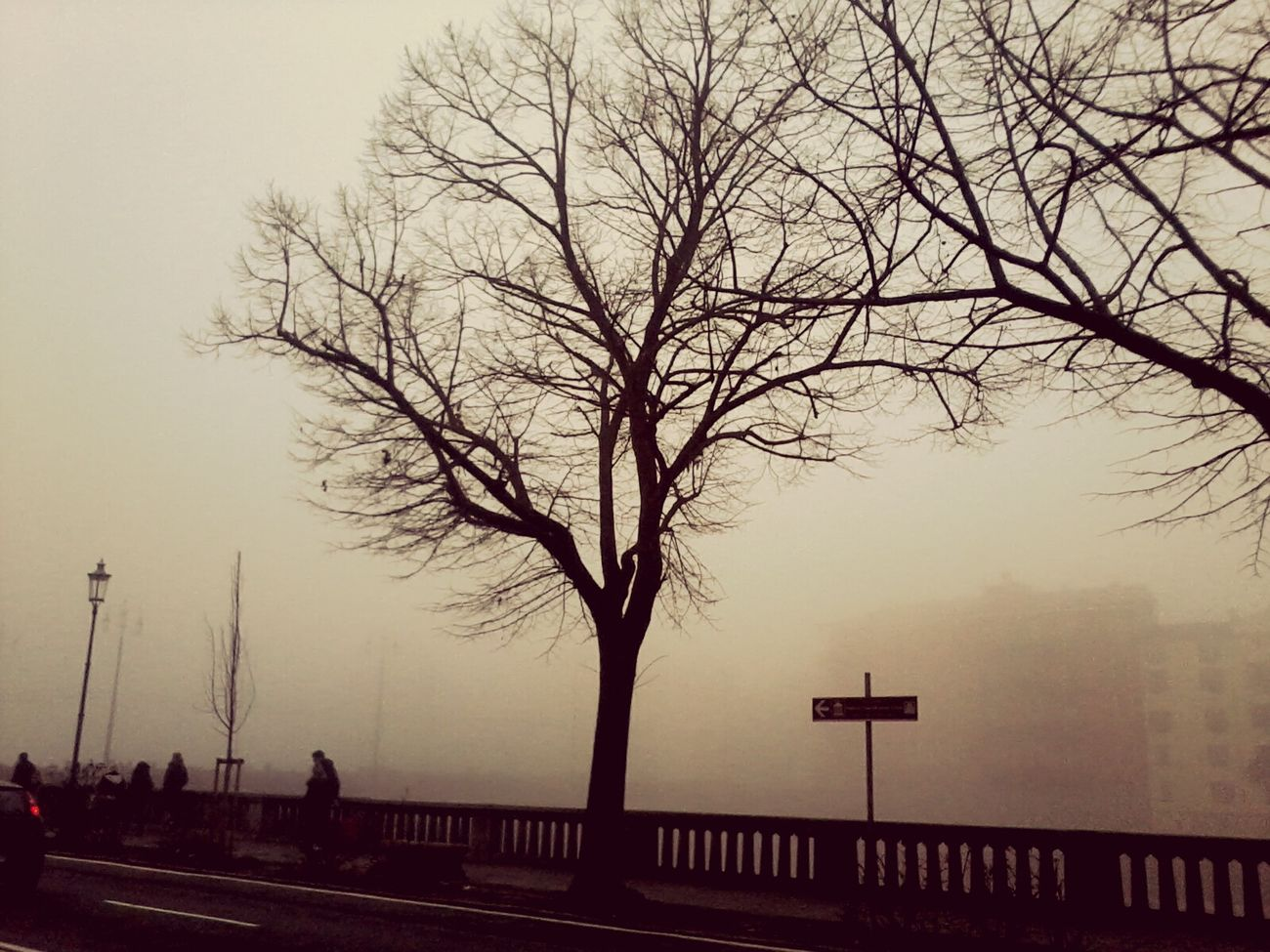 Parma Taking Photos Troppa Nebbia Albero Solitudine