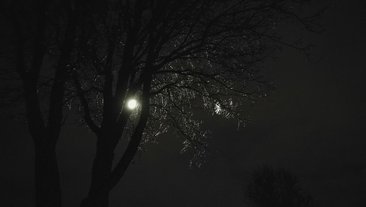 tree, low angle view, nature, night, silhouette, beauty in nature, branch, tranquility, moon, bare tree, outdoors, tranquil scene, scenics, no people, illuminated, sky, moonlight, clear sky, astronomy