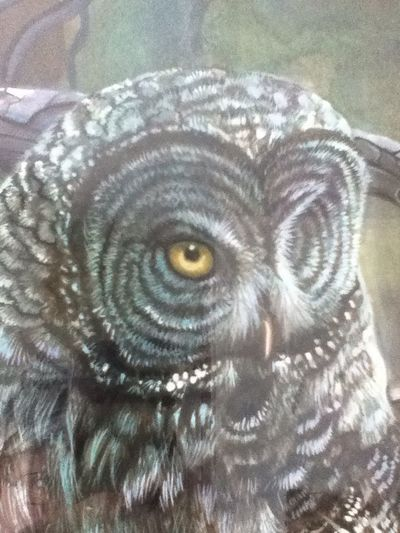 The Owl Has Landed... ^v^