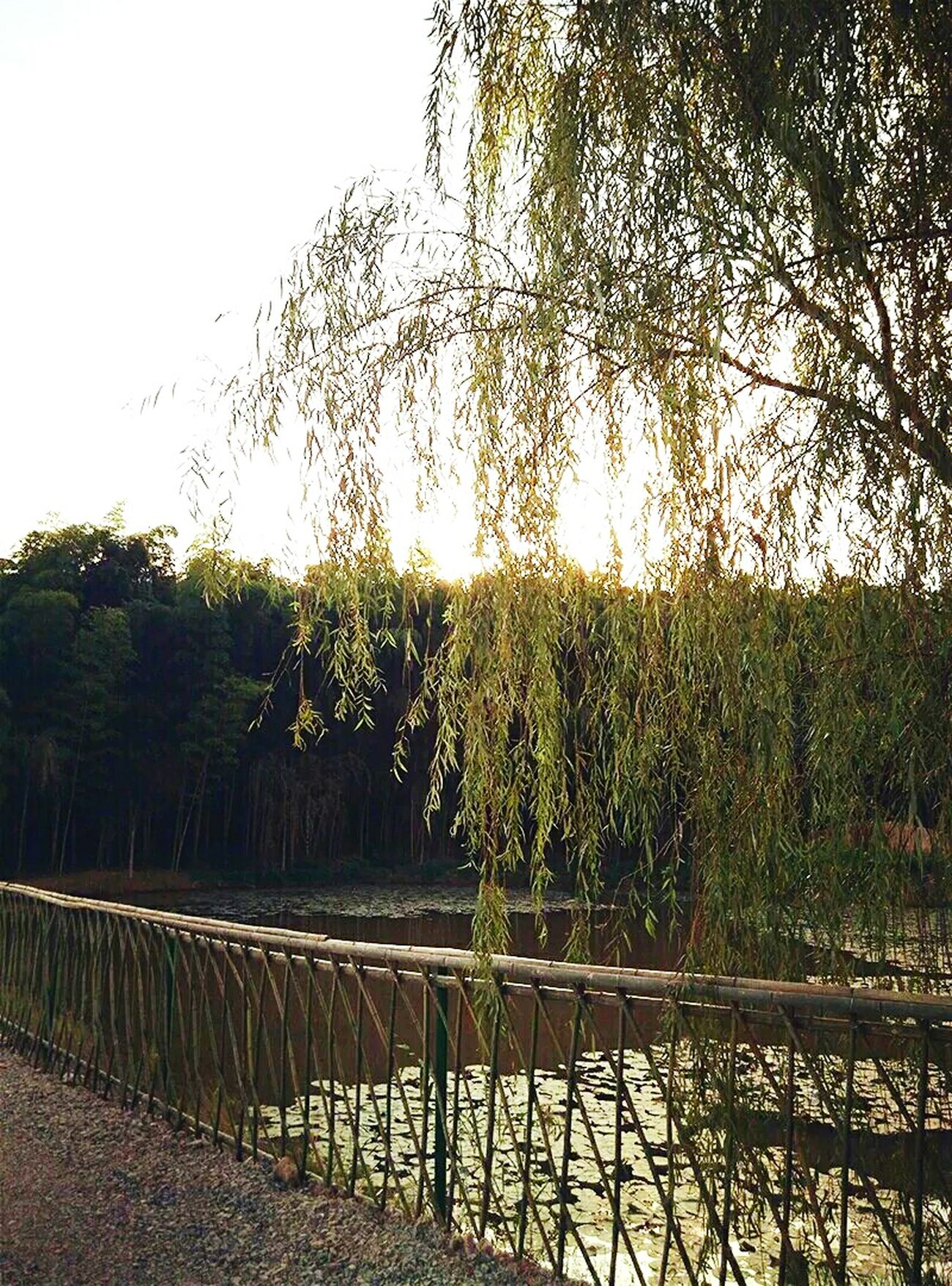 Nature Country Village Life Taking Photos Well  Free Time Life EyeEm China China Relaxing Old Town On The Road Travel Relax Enjoy Life Good Times Sky Good Wether Stay Trees Water Rivers