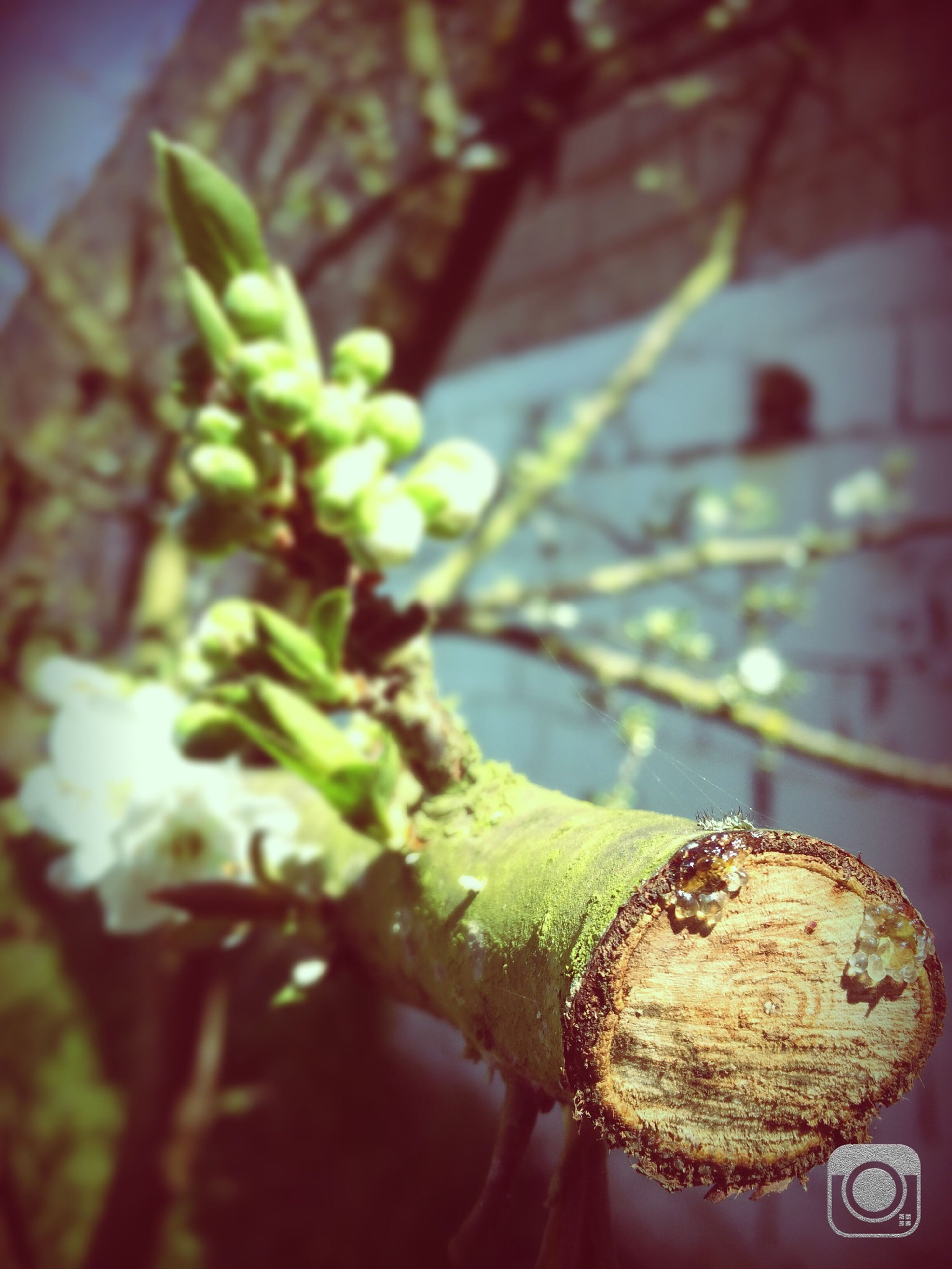 close-up, focus on foreground, leaf, green color, selective focus, plant, indoors, no people, potted plant, day, one animal, growth, nature, freshness, sunlight, animal themes, built structure, branch, wall - building feature