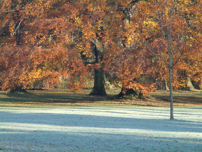 morning in the park after frosty night Fall Beauty Sunlight Tranquility Beauty In Nature Day Fall Nature No People Outdoors Park Scenics Sunbeam Tranquility Tree