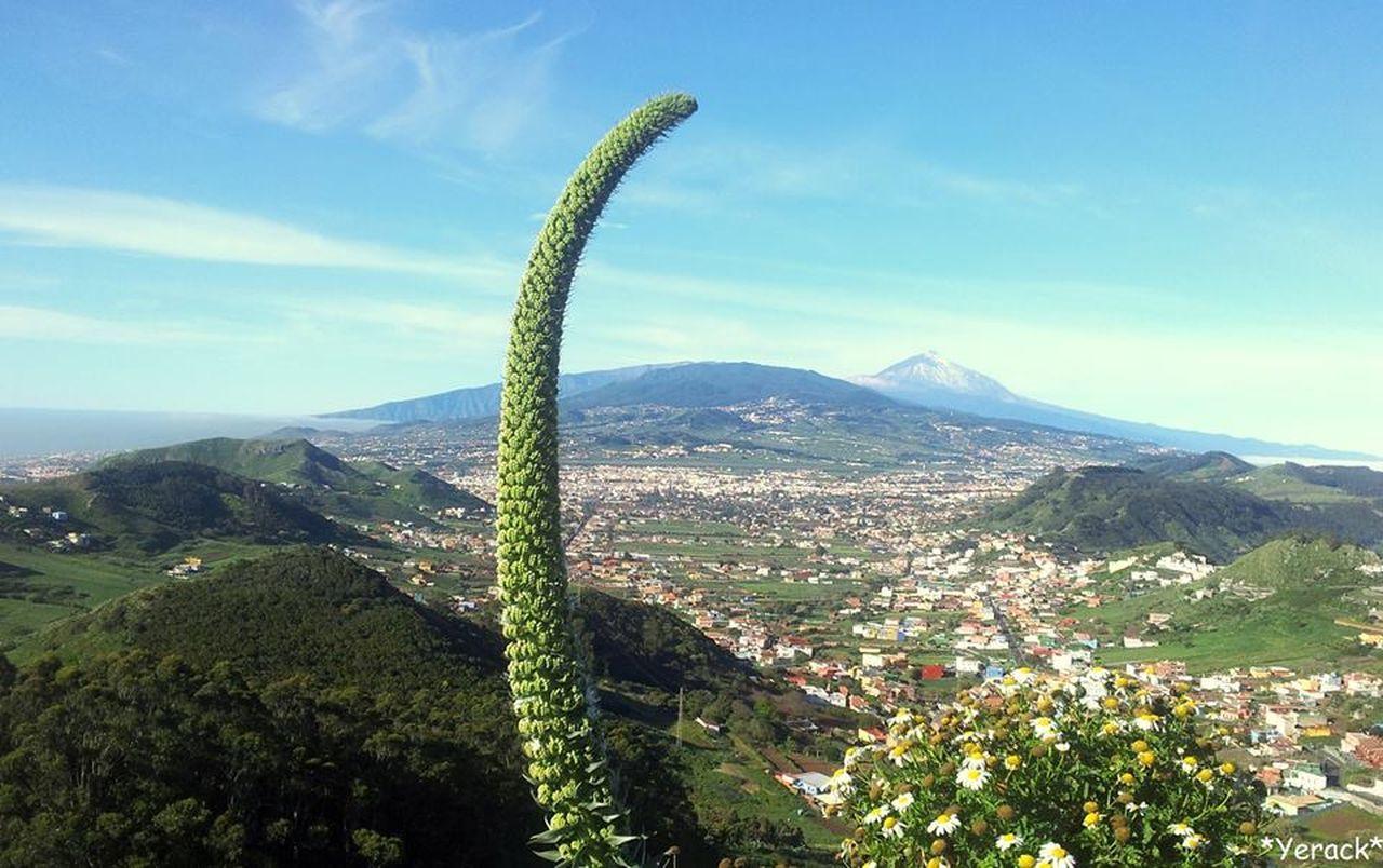 Mirador con papá Teide de fondo. Teide Volcano Beauty In Nature Nature Scenics Mountain Teide National Park Volcano Tenerife Island Canarias Canary Islands Beatiful Tajinaste Valley Mirador